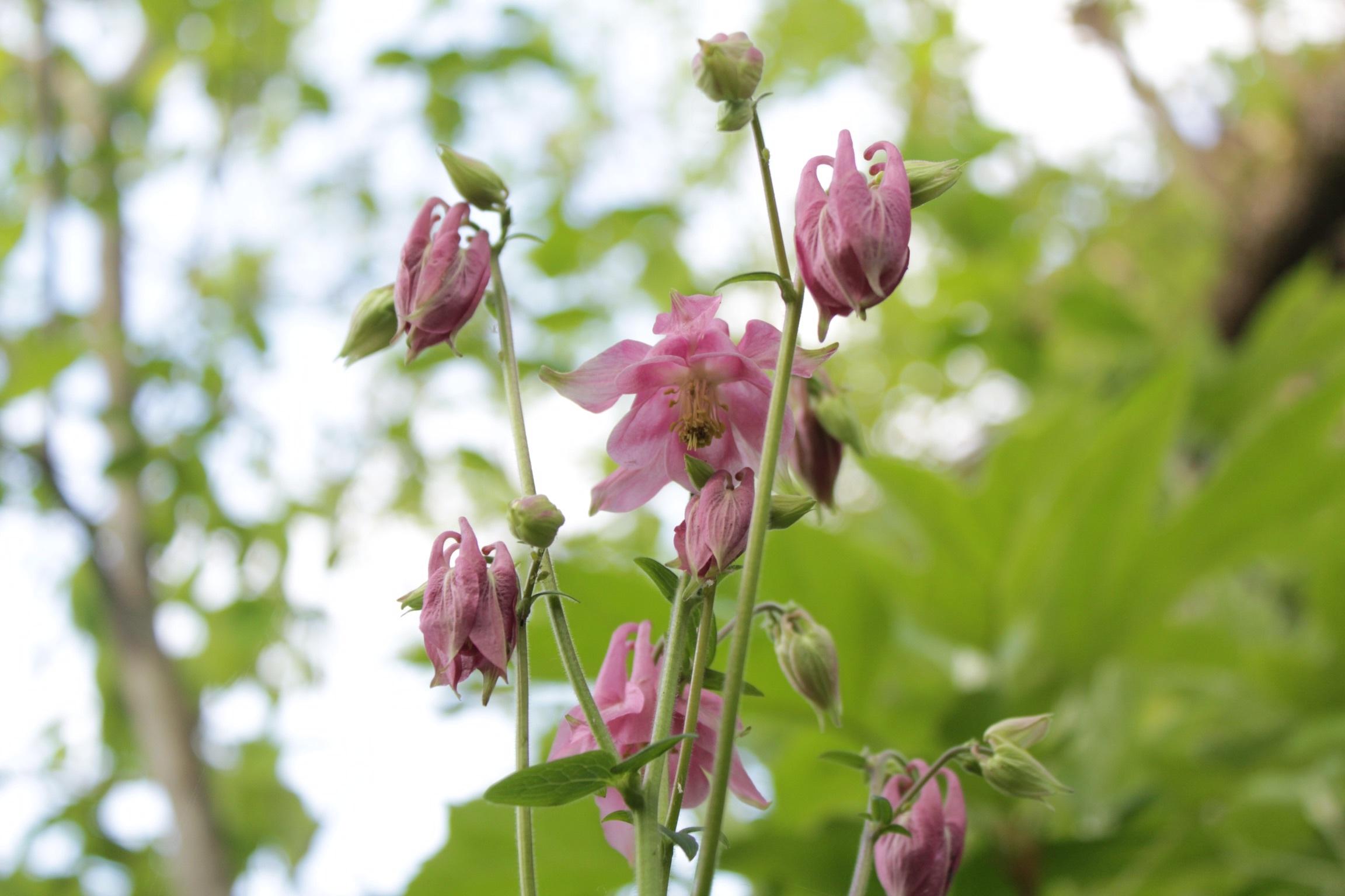 庭で朝ごはん_b0132338_07414982.jpeg