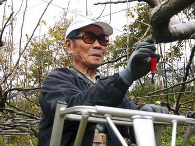 熊本梨 本藤果樹園 令和2年も7月下旬からの出荷に向け、匠の摘果作業がスタートしてます!_a0254656_18173308.jpg