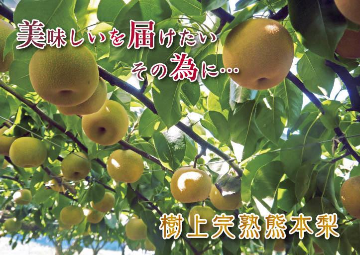 熊本梨 本藤果樹園 令和2年も7月下旬からの出荷に向け、匠の摘果作業がスタートしてます!_a0254656_18221455.jpg