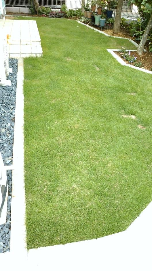 芝生張り ウィリアムモリス正規販売店のブライト_c0157866_17453719.jpg