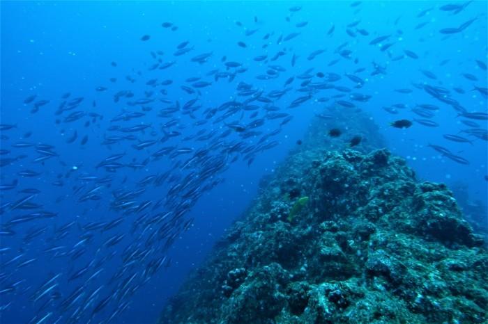 200507 水中では、クマザサ玉 水面では、マンタ!!_a0335173_16294307.jpg
