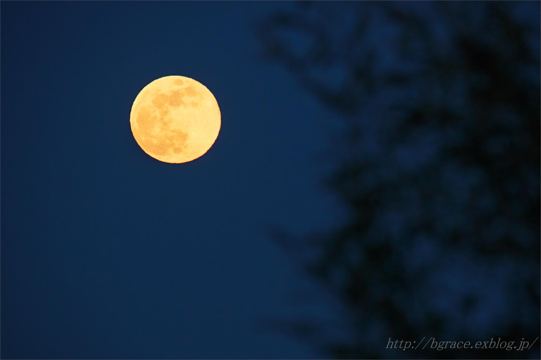 満月 / フラワームーン_b0191074_23181601.jpg