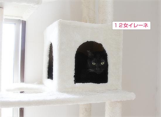 魅惑のキャットタワー_a0389088_09275133.jpg