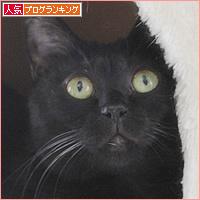 魅惑のキャットタワー_a0389088_09275152.jpg