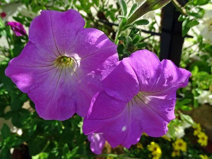 庭の花_e0016894_09021986.jpg