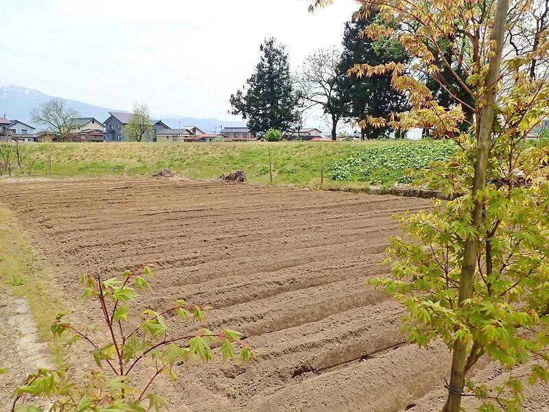"""兼業農家の家庭菜園では\""""畝立て作業\""""でした_c0336902_19061975.jpg"""