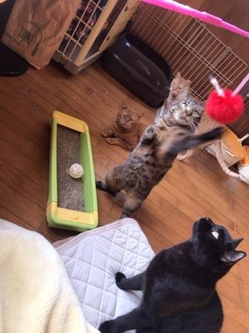 オトコノコ4匹と遊んでます♪_f0242002_20480189.jpg