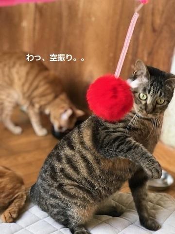 オトコノコ4匹と遊んでます♪_f0242002_20530382.jpg