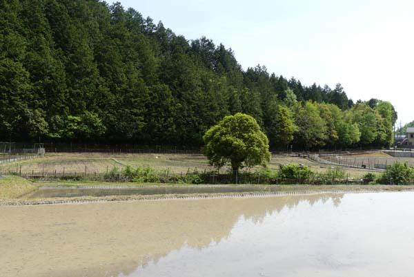 田植えの準備が始まった 菜園の近く_e0048413_20430608.jpg