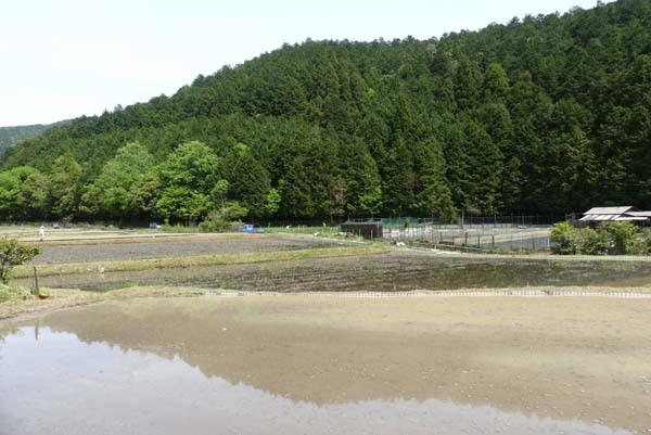 田植えの準備が始まった 菜園の近く_e0048413_20431197.jpg