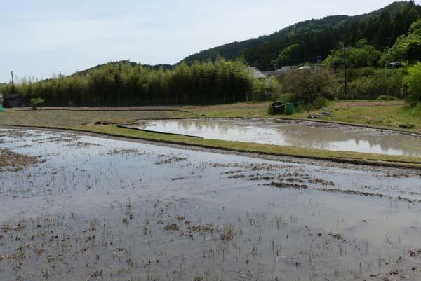 田植えの準備が始まった 菜園の近く_e0048413_20431612.jpg