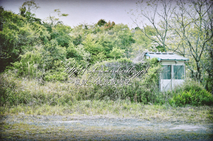 新緑の廃屋。_f0235723_17010830.jpg