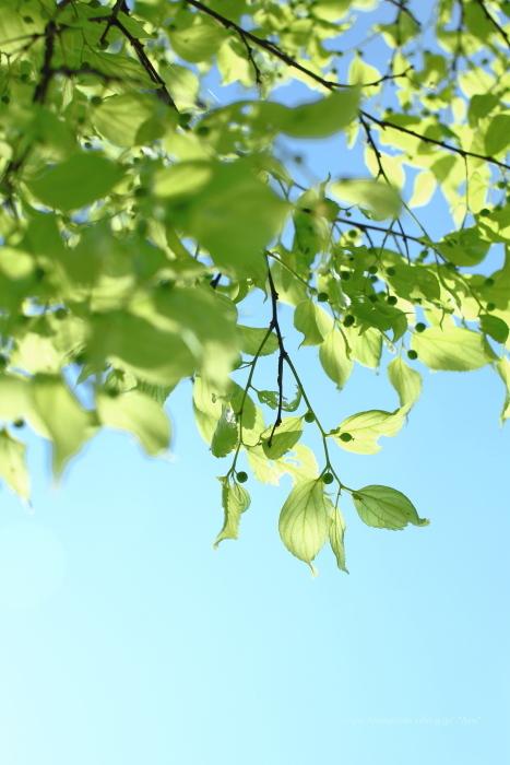 新緑_e0347431_16081826.jpg