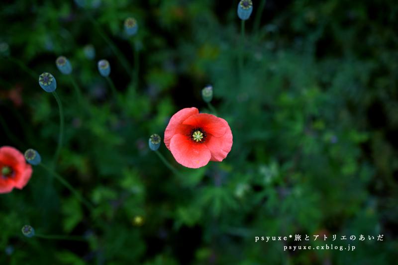 Flower Photograph #21_e0131432_11461309.jpg