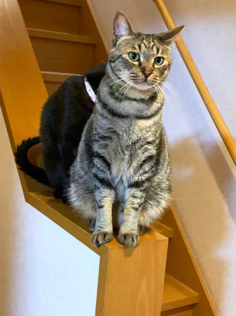 階段の可愛い子たち_d0355333_22430927.jpg