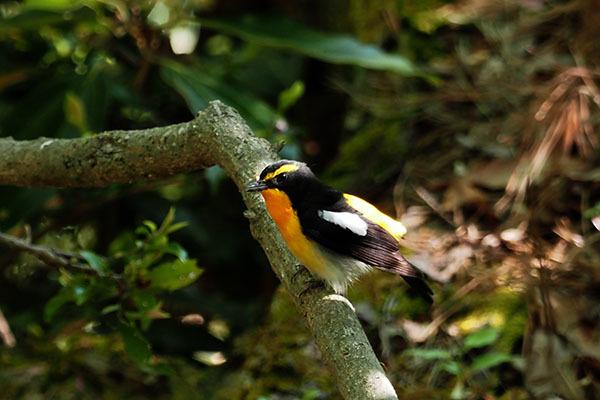 色もとりどりで鳥もとりどり_e0022047_22393800.jpg