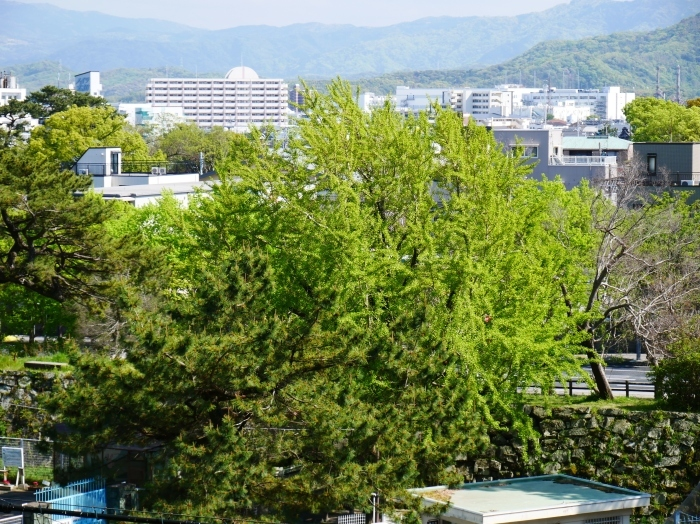 和歌山城公園にて  2020-05-13 00:00   _b0093754_23021460.jpg