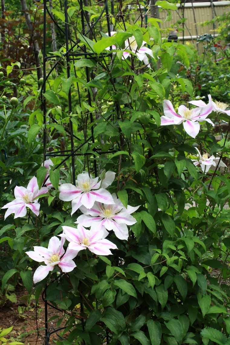 お花三昧の日常or。。。~公園と庭の草木~_a0107574_16020098.jpg