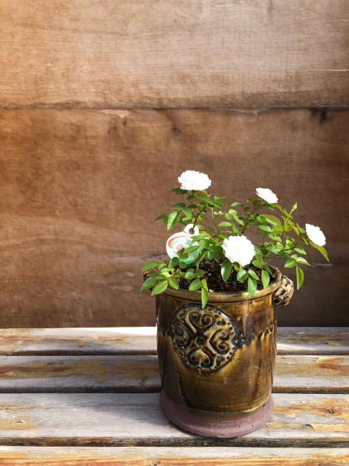 今日は鉢の植え替え_c0298879_17110475.jpg