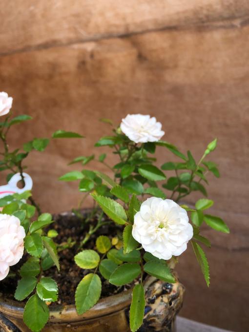 今日は鉢の植え替え_c0298879_17112315.jpg