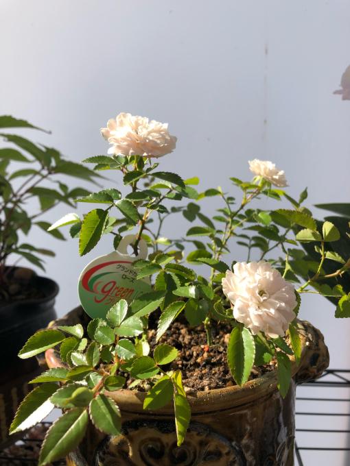 今日は鉢の植え替え_c0298879_17113303.jpg