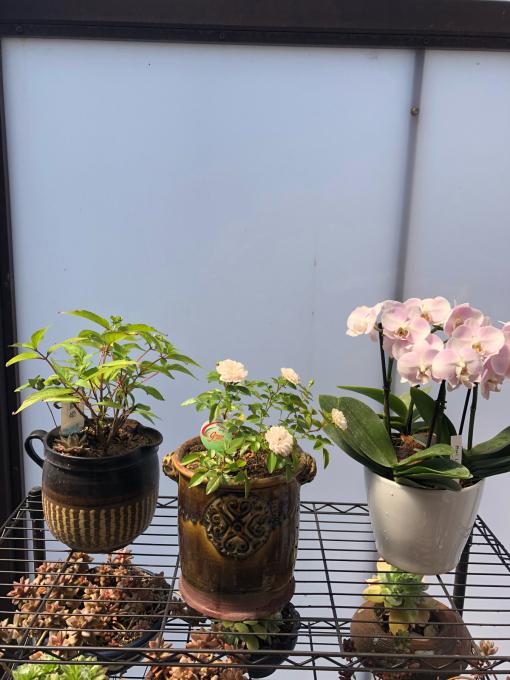 今日は鉢の植え替え_c0298879_17114558.jpg