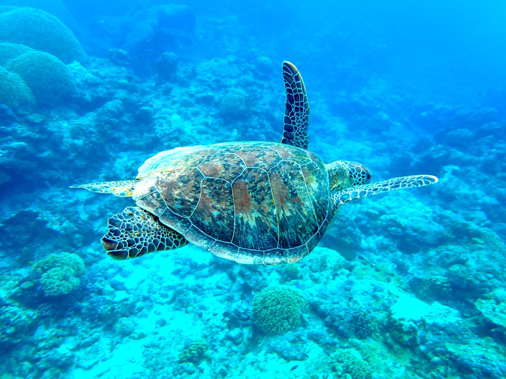 知的冒険の旅 iguanavoice_d0175187_17294776.jpg