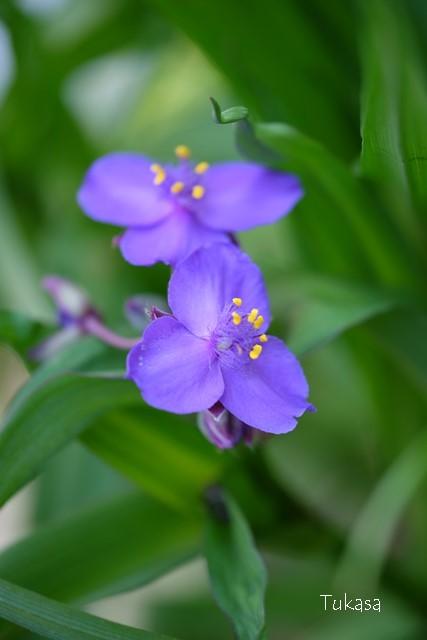 五月の花々_e0040092_22565400.jpg