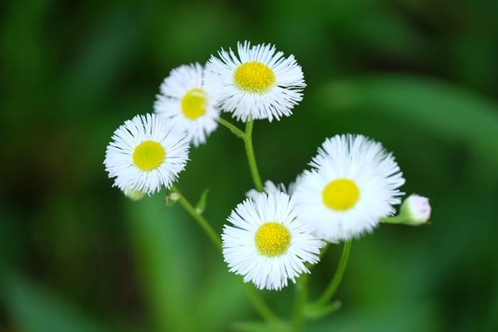 五月の花々_e0040092_22584944.jpg