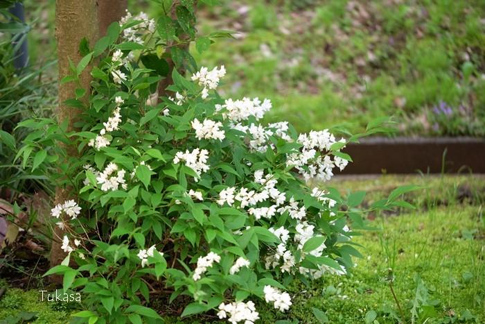 五月の花々_e0040092_22594552.jpg