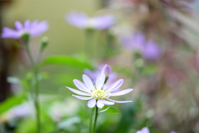 五月の花々_e0040092_23012916.jpg