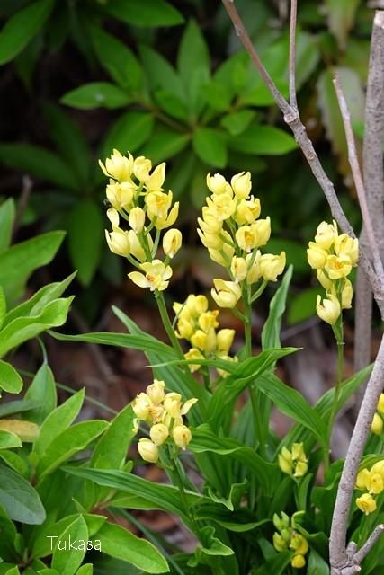 五月の花々_e0040092_23220697.jpg