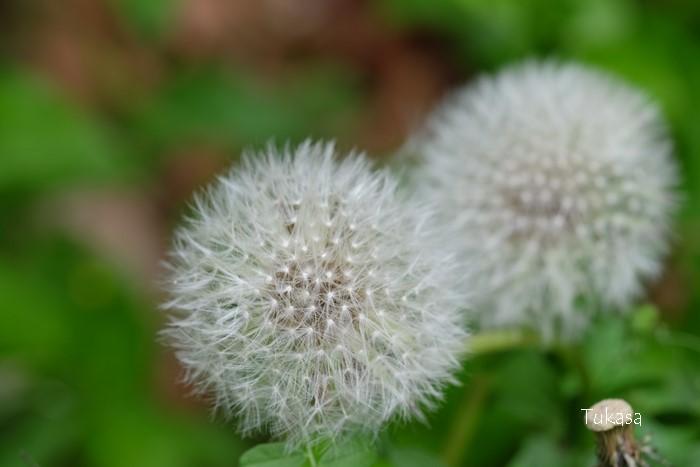 五月の花々_e0040092_23222962.jpg