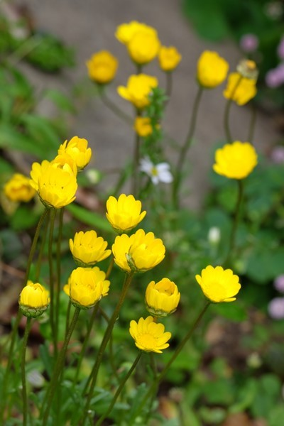 五月の花々_e0040092_23225108.jpg