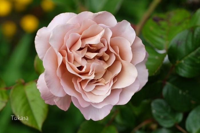 五月の花々_e0040092_23231732.jpg