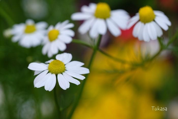 五月の花々_e0040092_23272019.jpg