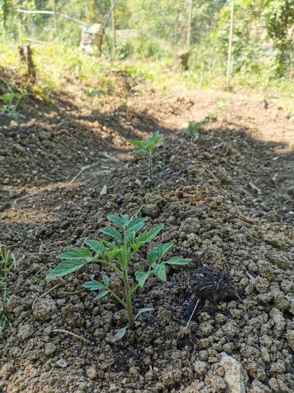 畑あるある_f0106597_02093407.jpg