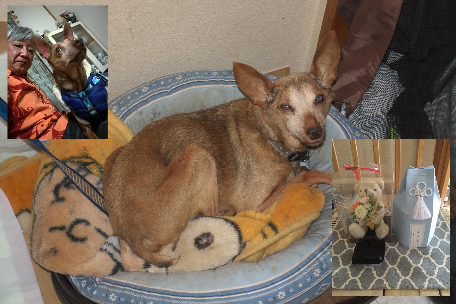 Mocha(モカ=犬)13歳と8ヶ月で逝く。_a0271402_11002958.jpg