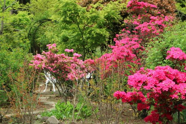 Stay Garden * 牡丹が咲きました~♪_e0397815_23183848.jpg