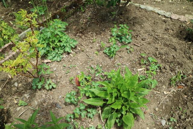 Stay Garden * 牡丹が咲きました~♪_e0397815_23274391.jpg