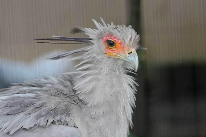雨の上野動物園:ヘビクイワシの美貌~ツル舎の鳥たち(June 2019)_b0355317_21351890.jpg