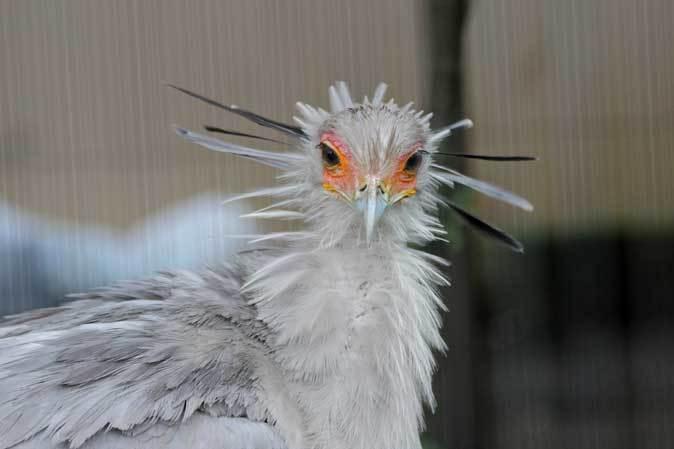 雨の上野動物園:ヘビクイワシの美貌~ツル舎の鳥たち(June 2019)_b0355317_21355316.jpg