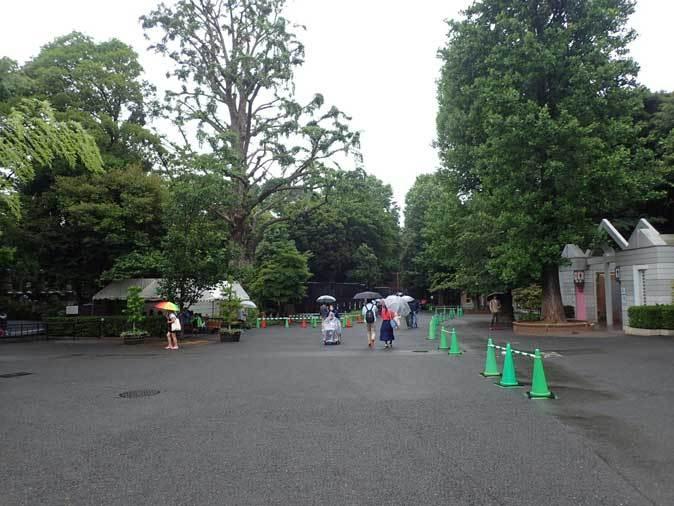 雨の上野動物園:ヘビクイワシの美貌~ツル舎の鳥たち(June 2019)_b0355317_21431519.jpg
