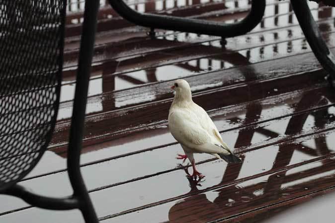 雨の上野動物園:ヘビクイワシの美貌~ツル舎の鳥たち(June 2019)_b0355317_21435033.jpg