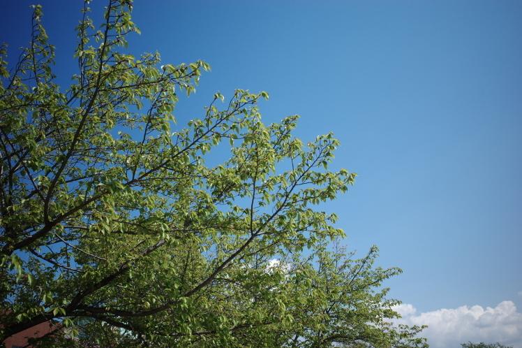 新緑の五月_f0209122_09490919.jpg