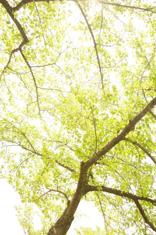 新緑の五月_f0209122_09502276.jpg