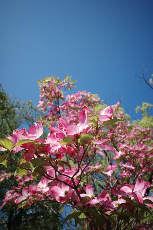 新緑の五月_f0209122_09503752.jpg