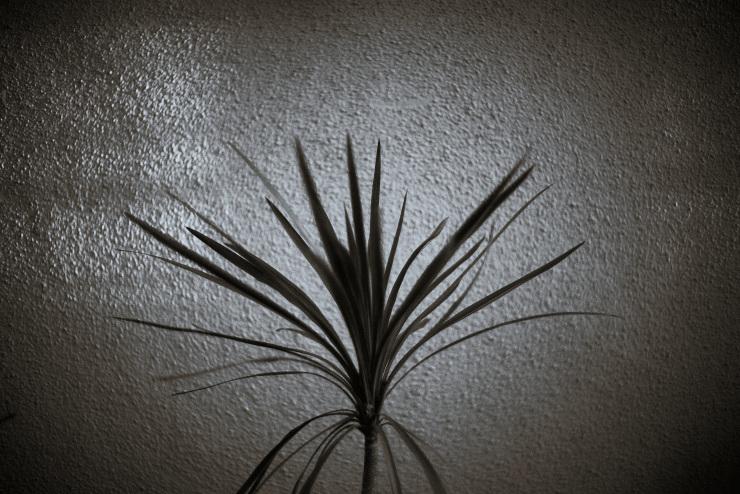 plant_e0342136_21212599.jpg