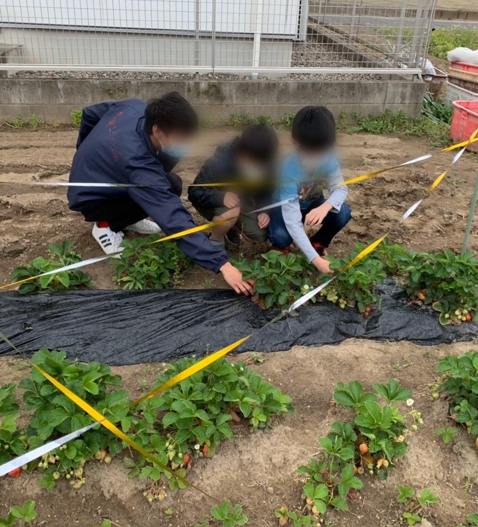 でっかいチーム 本日苺の収穫🍓_f0065444_16054243.jpeg