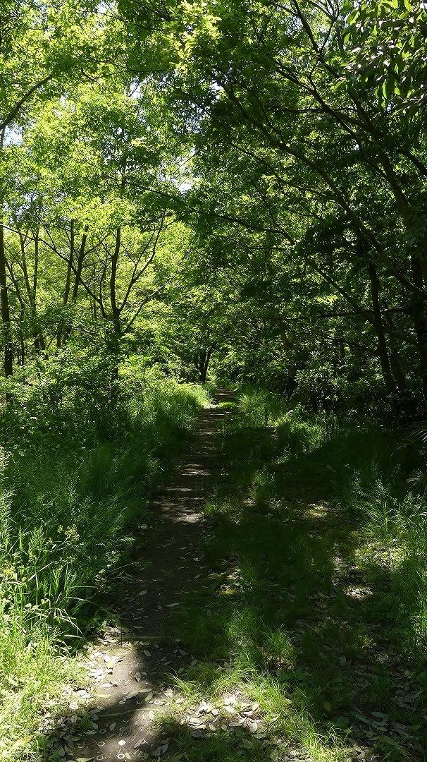 癒やしの森に包まれて_a0185081_09231518.jpg